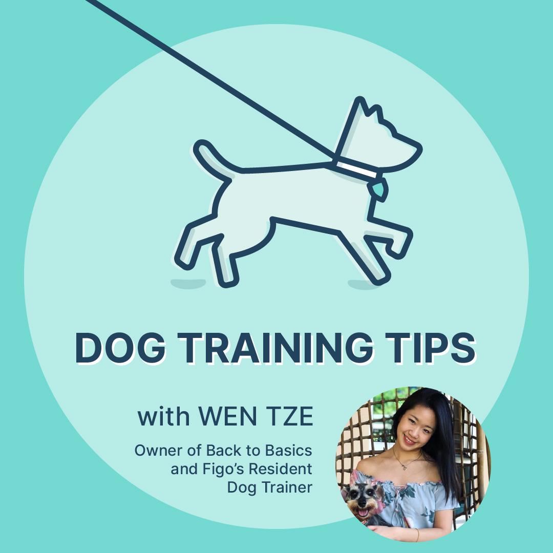 Wen Tze Ng, Resident Dog Trainer at Figo